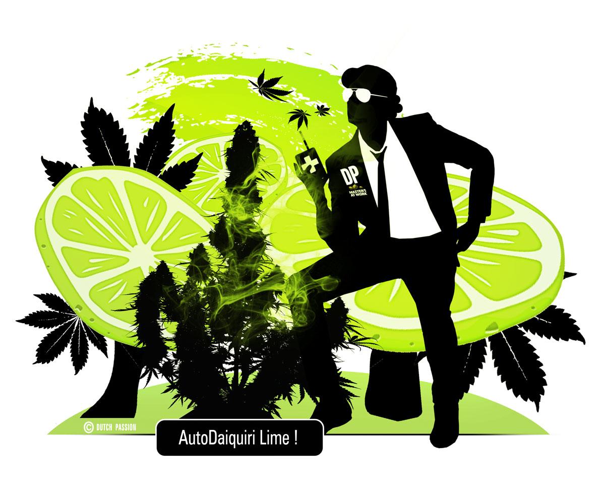 AutoDaiquiri Lime USA Cannabis genetics