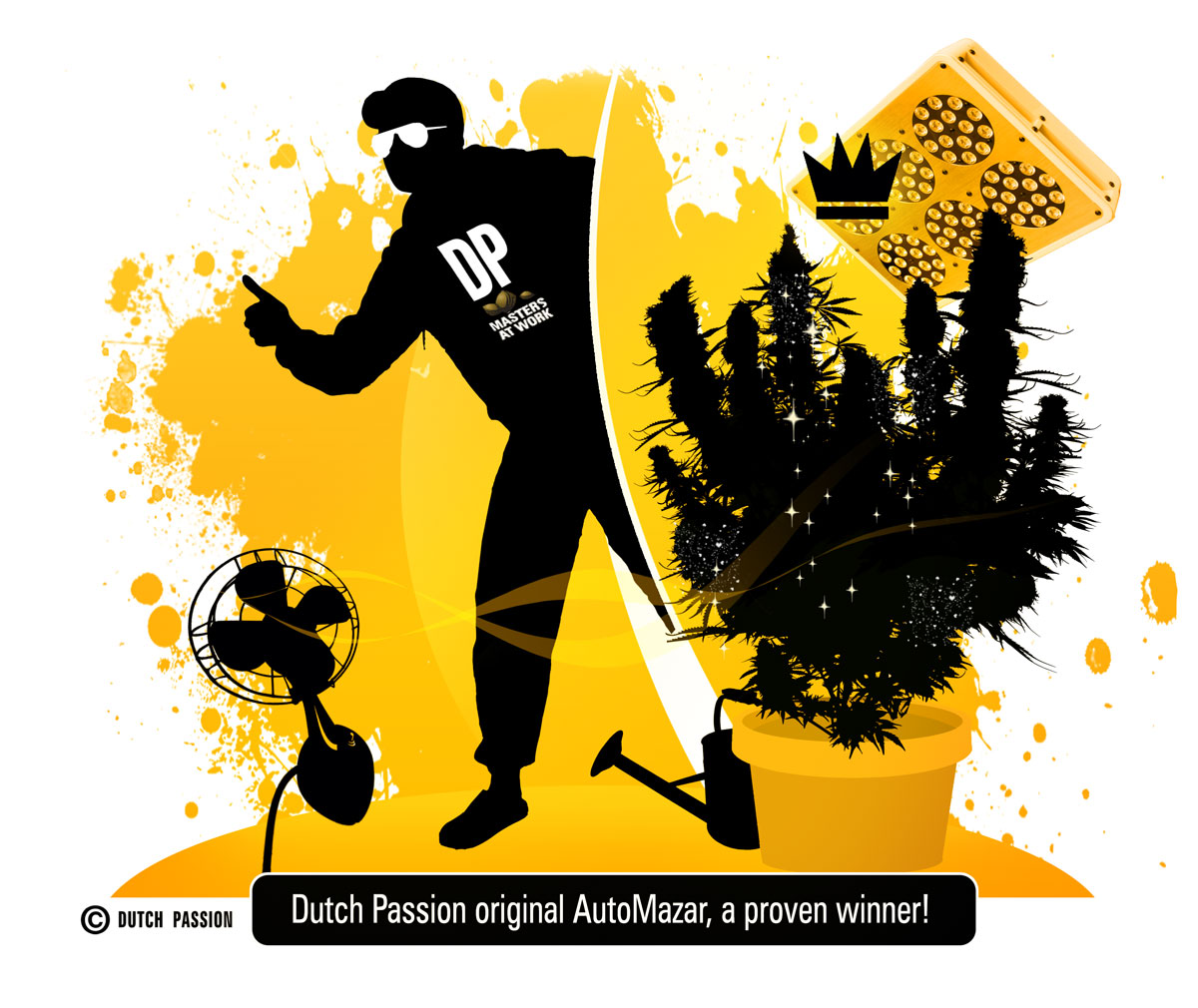 Dutch Passion AutoMazar Grow