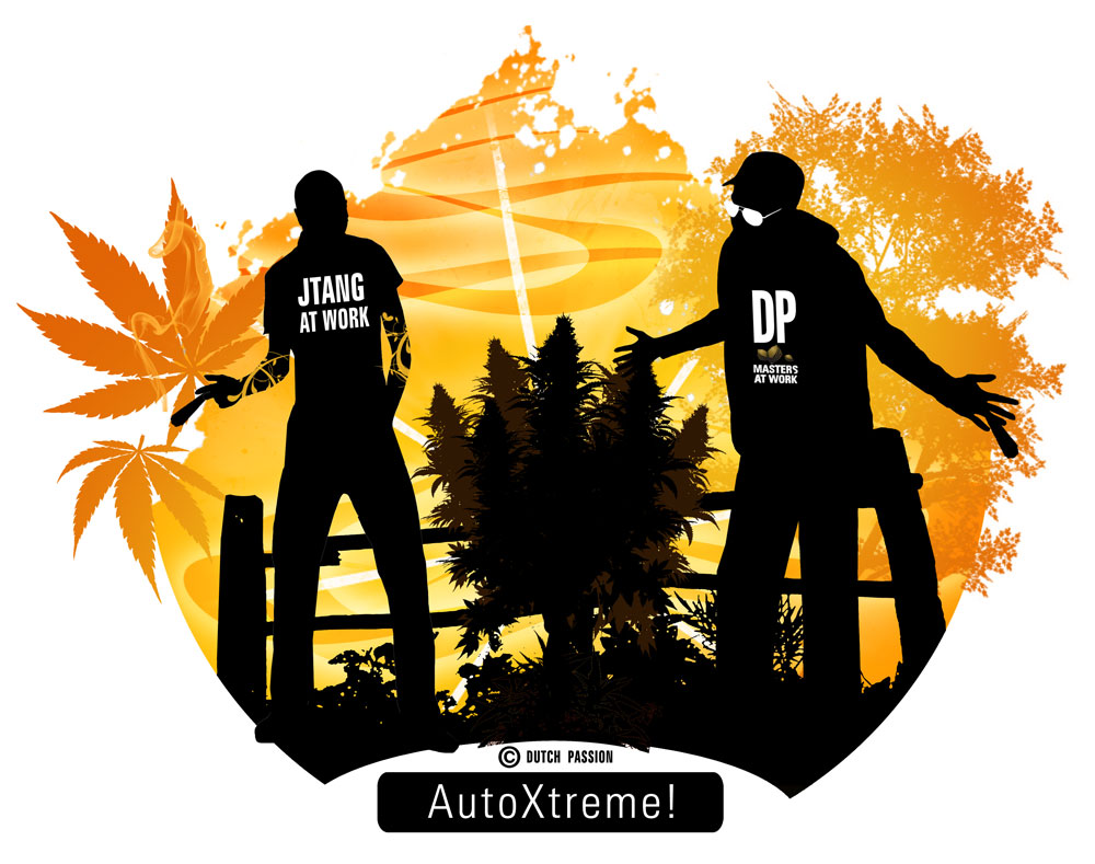 AutoXtreme review by JTang