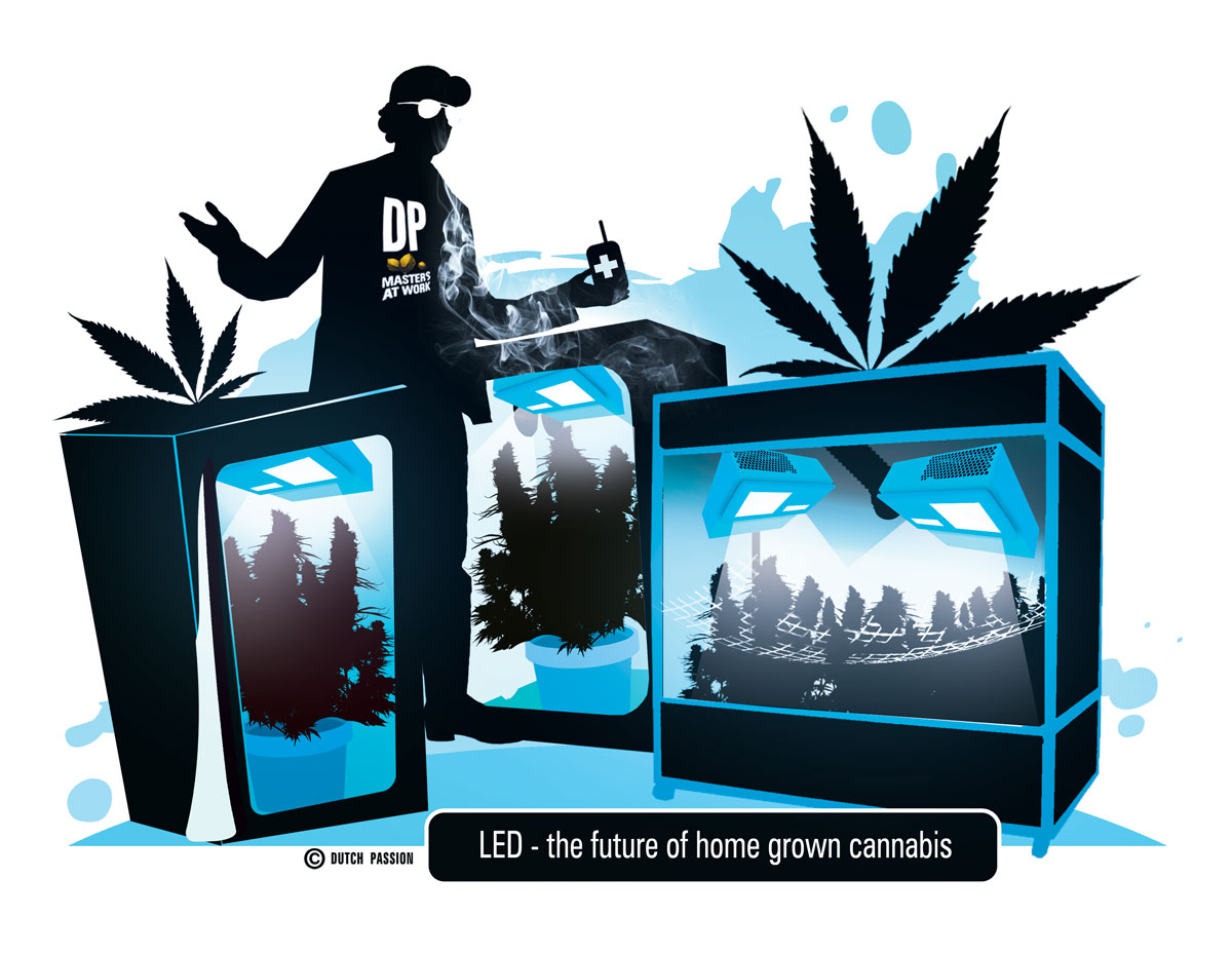 Growing cannabis with LED