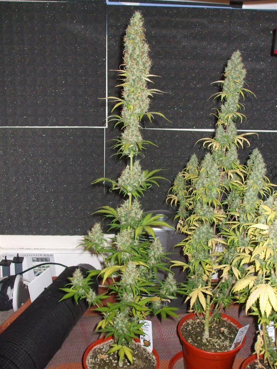 uniform plants