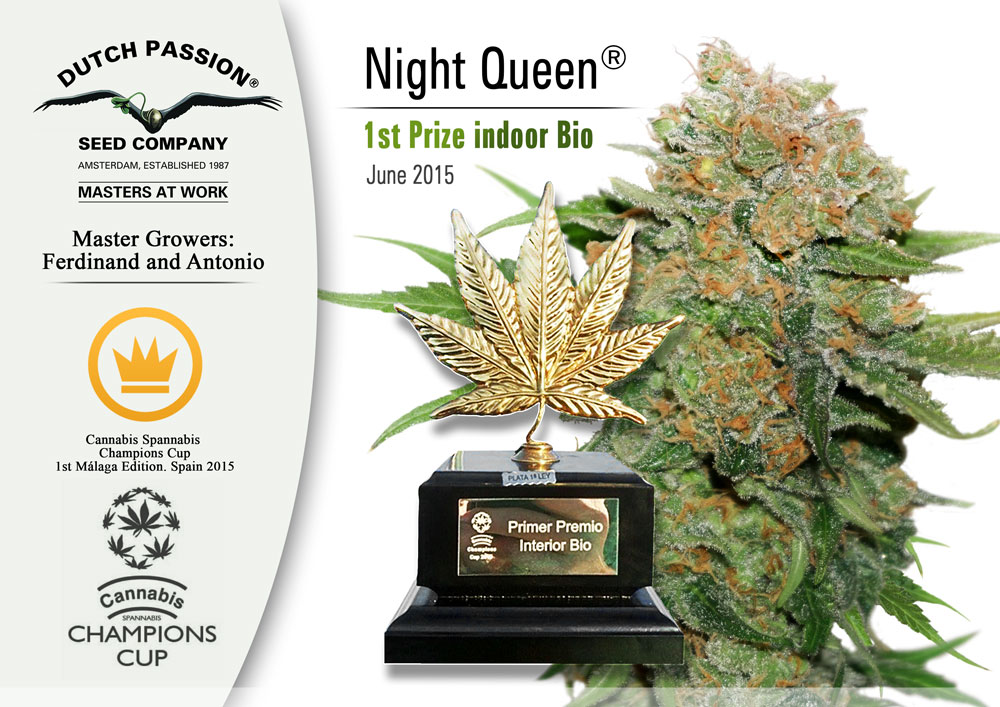cannabis cup for night queen dutch passion