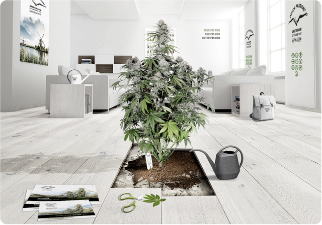 How to optimise your grow room