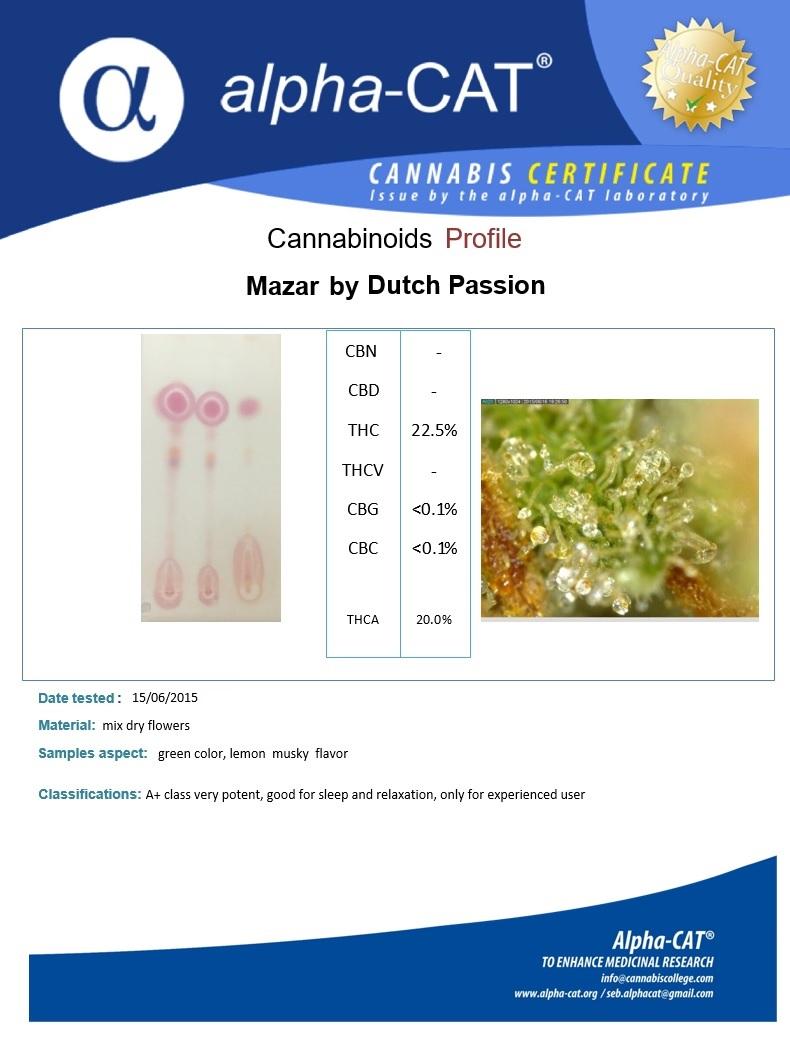 Mazar analysis Dutch Passion