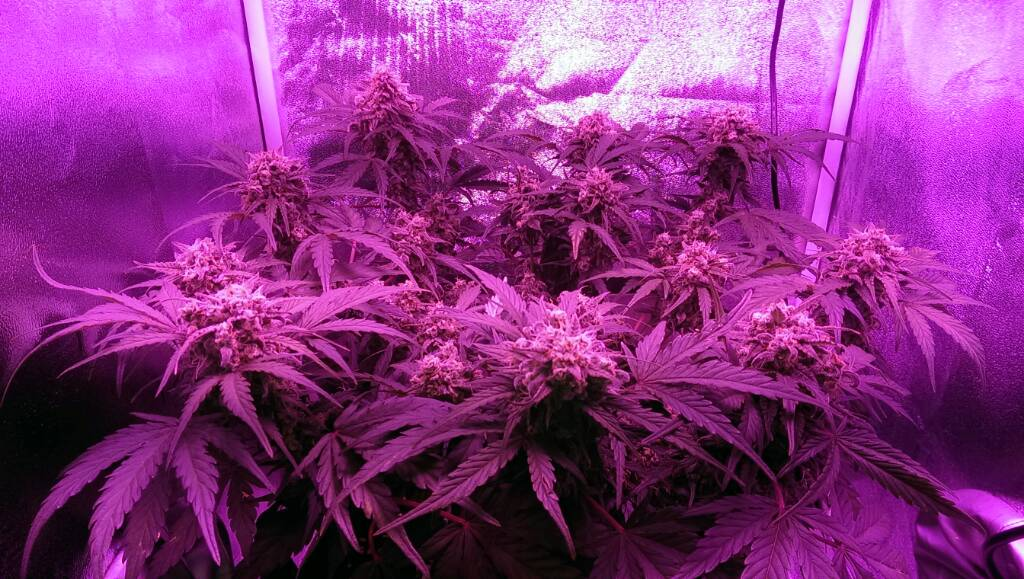 Think Different home grow