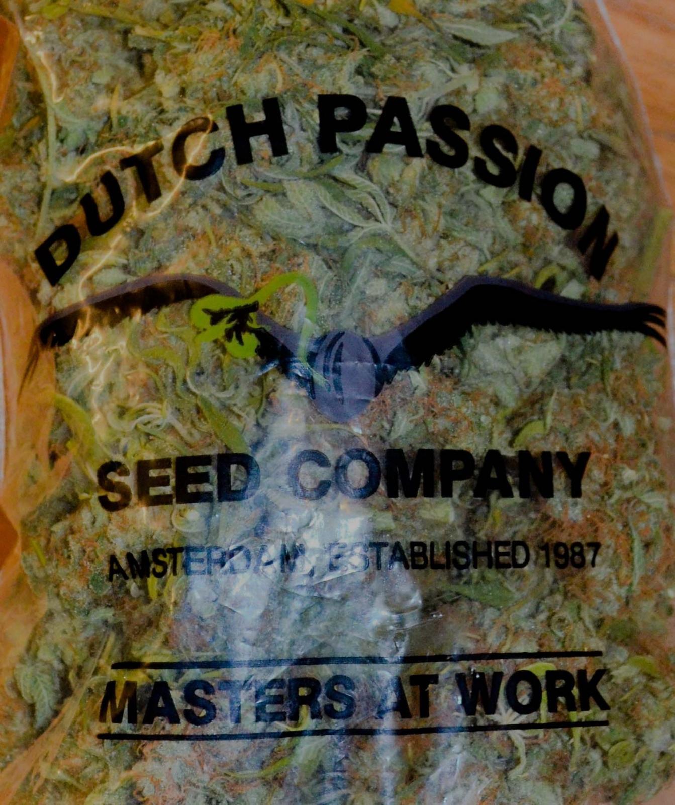 Bag of pot dutch passion