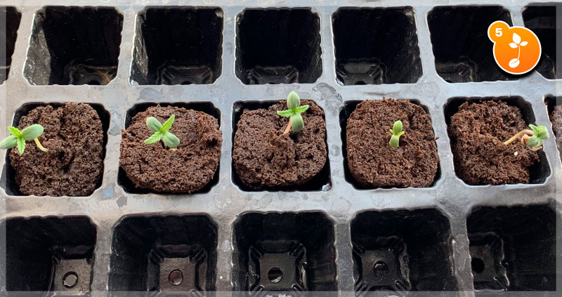 Step 5: Watch your seedlings grow