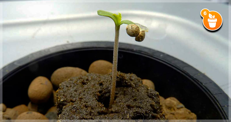 seedling growing in a medium