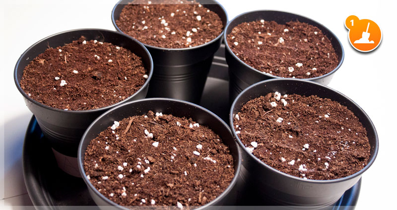 soil in pots ready for germination