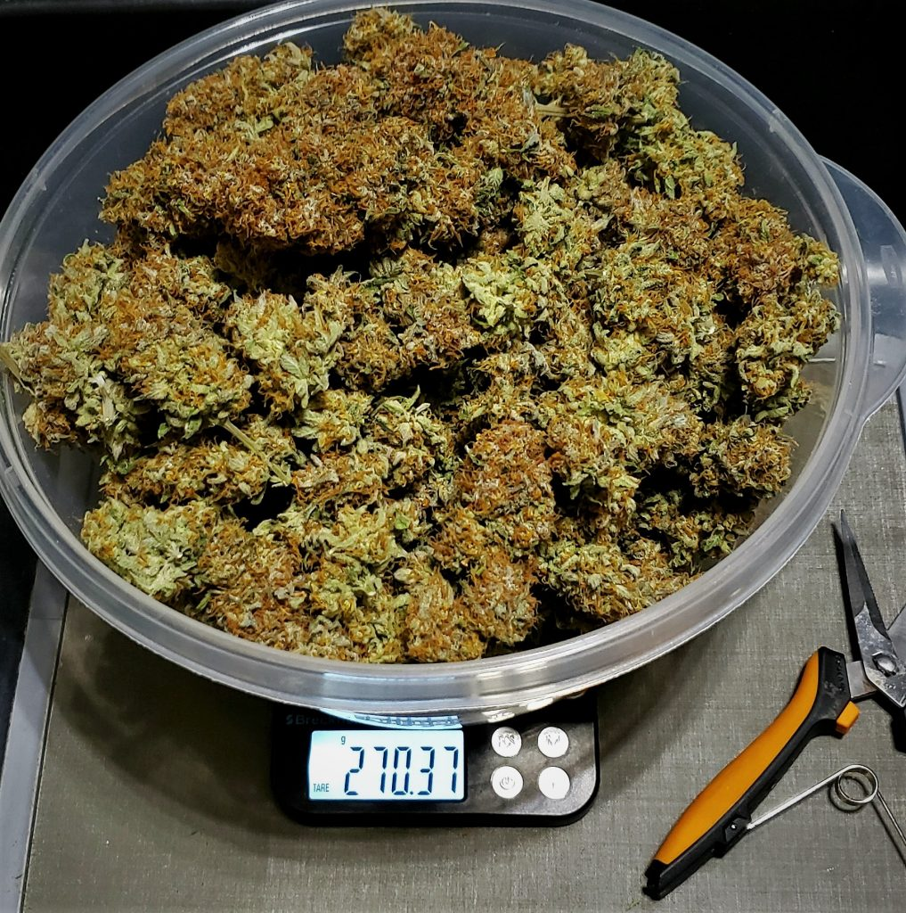 A bowl full of power plant goodness.