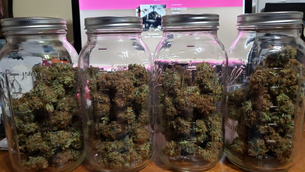 Power Plant buds in the jars.