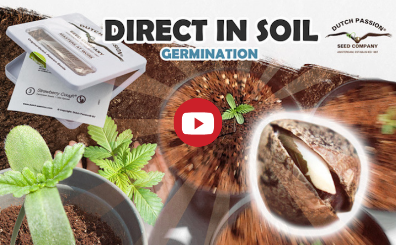 Direct in soil germination video