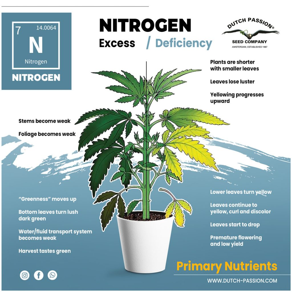 Nitrogen cannabis excess and deficiency
