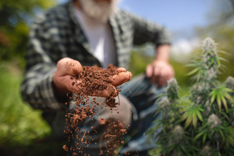Macro and micro cannabis nutrients explained