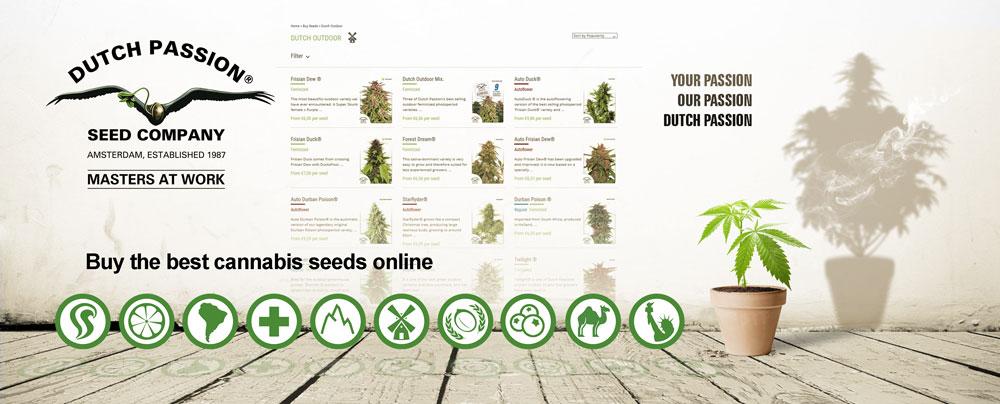 How to grow autoflower seeds