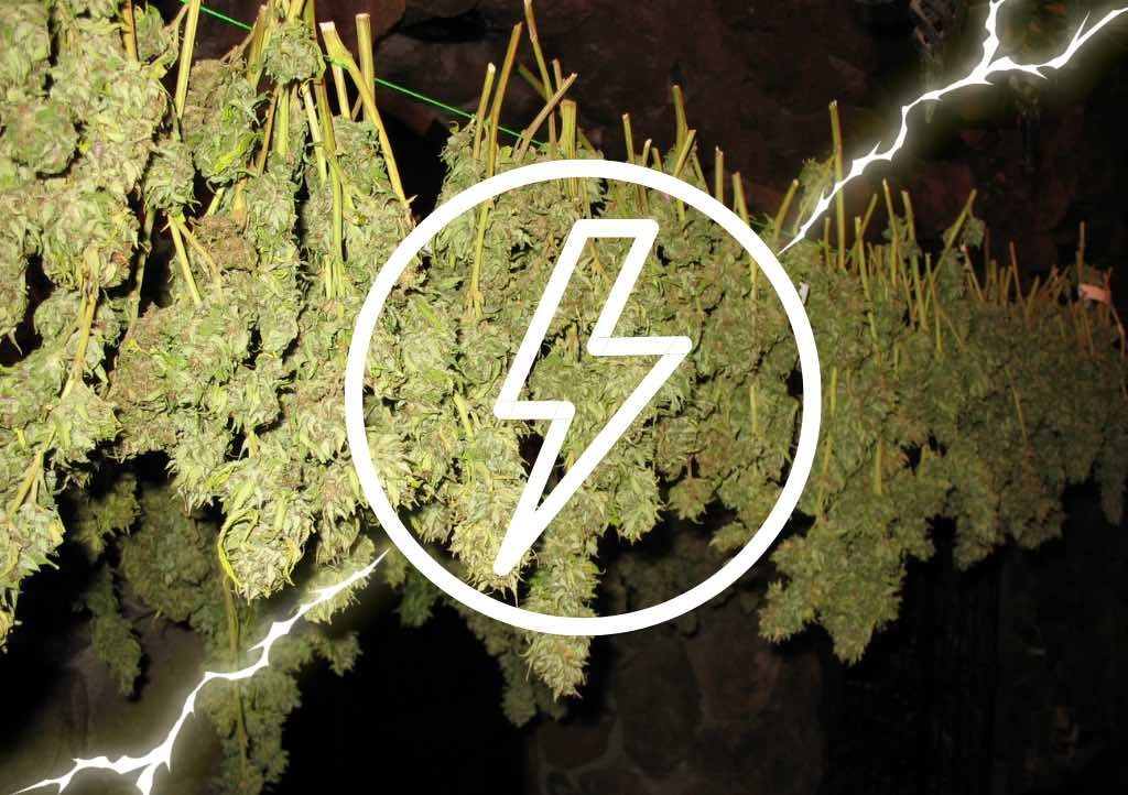 How to quick-dry your cannabis harvest